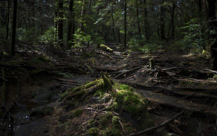 nature, Forest HD Wallpaper Desktop Background