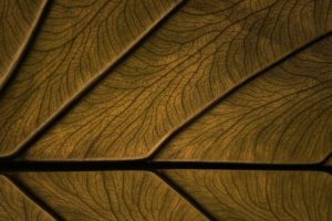texture, Wood, Wooden surface