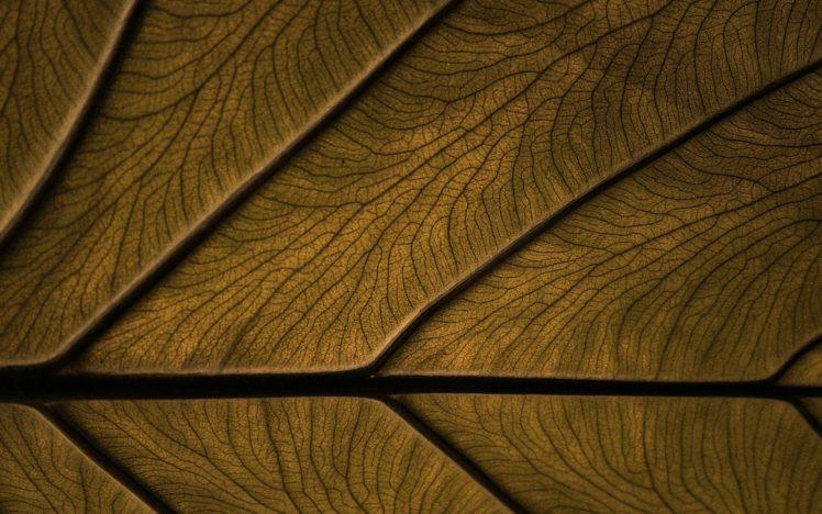 texture, Wood, Wooden surface HD Wallpaper Desktop Background