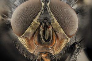 insect, Macro, Closeup, Bees