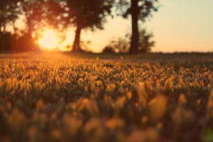 grass, Landscape, Nature