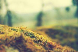 moss, Photography