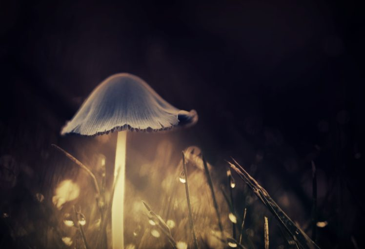 Mushroom Glowing Hd Wallpapers Desktop And Mobile Images