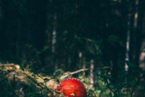 nature, Mushroom