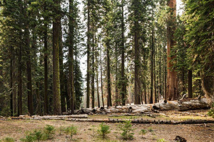 nature, Trees, Forest HD Wallpaper Desktop Background