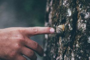 nature, Snail, Trees