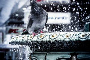city, Birds
