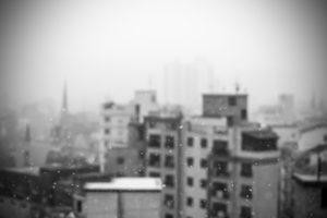 snow, Snowdrops, Monochrome