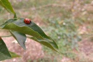 ladybugs, Leaves, Plants, Landscape