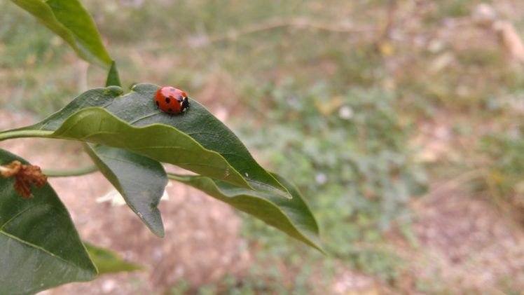 ladybugs, Leaves, Plants, Landscape HD Wallpaper Desktop Background