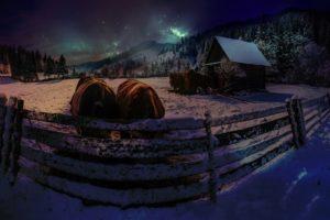 stars, Cow, Night, Winter, Snow
