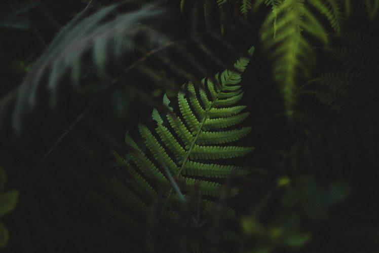 leaves, Depth of field, Nature HD Wallpaper Desktop Background