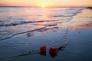 flowers, Rose, Sunlight, Beach