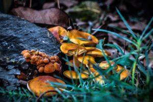 shrooms, Landscape, Fall