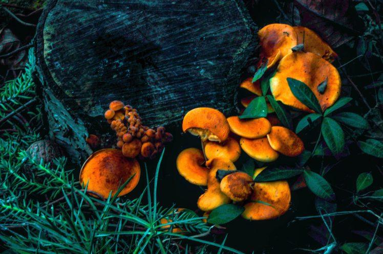 shrooms, Landscape, Fall HD Wallpaper Desktop Background