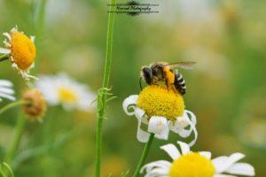 nature, Bug