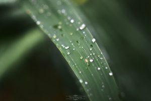 landscape, Nature, Water drops