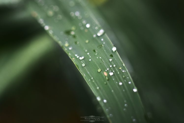 landscape, Nature, Water drops HD Wallpaper Desktop Background
