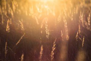 natural light, Nature, Sun, Sunlight