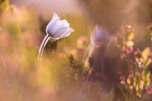 plants, Flowers, Macro, Depth of field