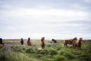 landscape, Animals, Mammals, Horse, Grass