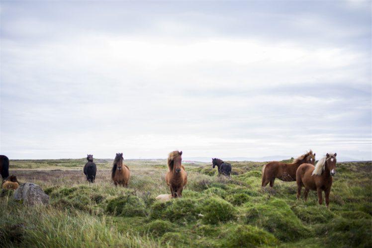 landscape, Animals, Mammals, Horse, Grass HD Wallpaper Desktop Background