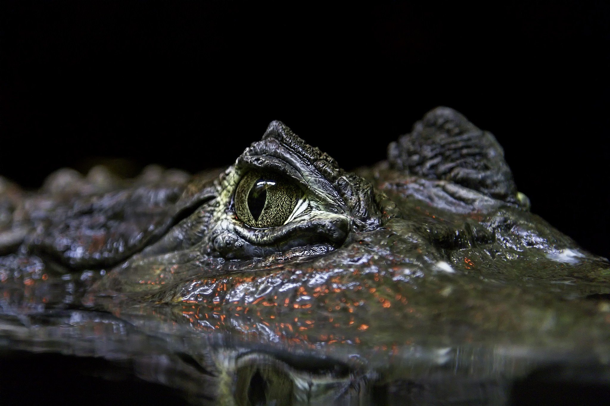 H D Reptiles animals, Reptiles HD W...