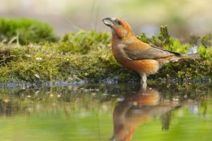 animals, Birds, Moss