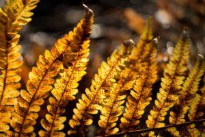 plants, Ferns, Sunlight