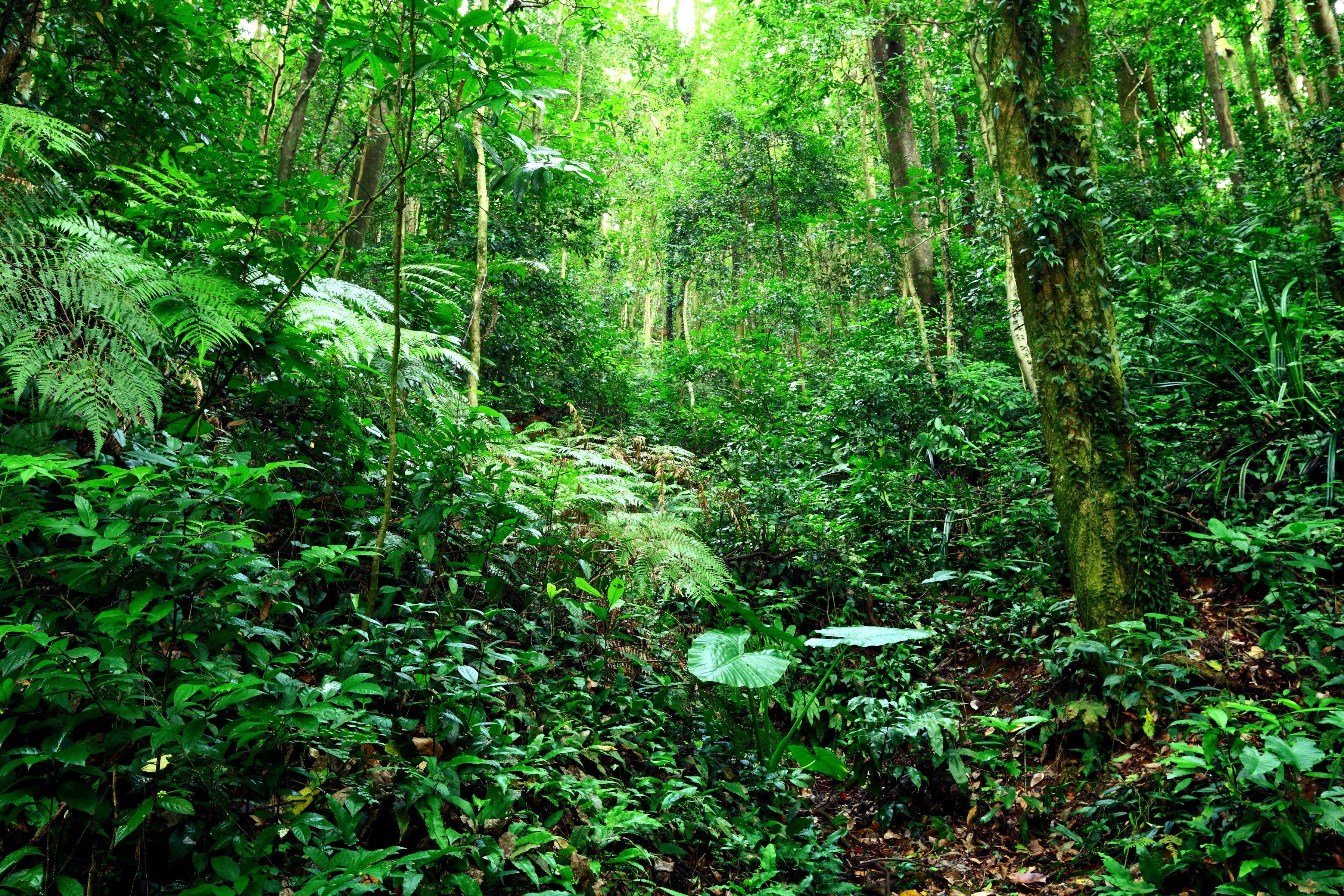 landscape, Plants, Forest, Trees Wallpaper