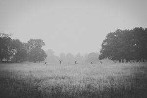 monochrome, Animals, Landscape