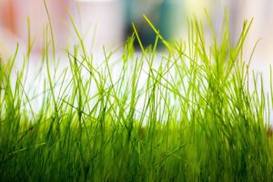 macro, Grass, Plants