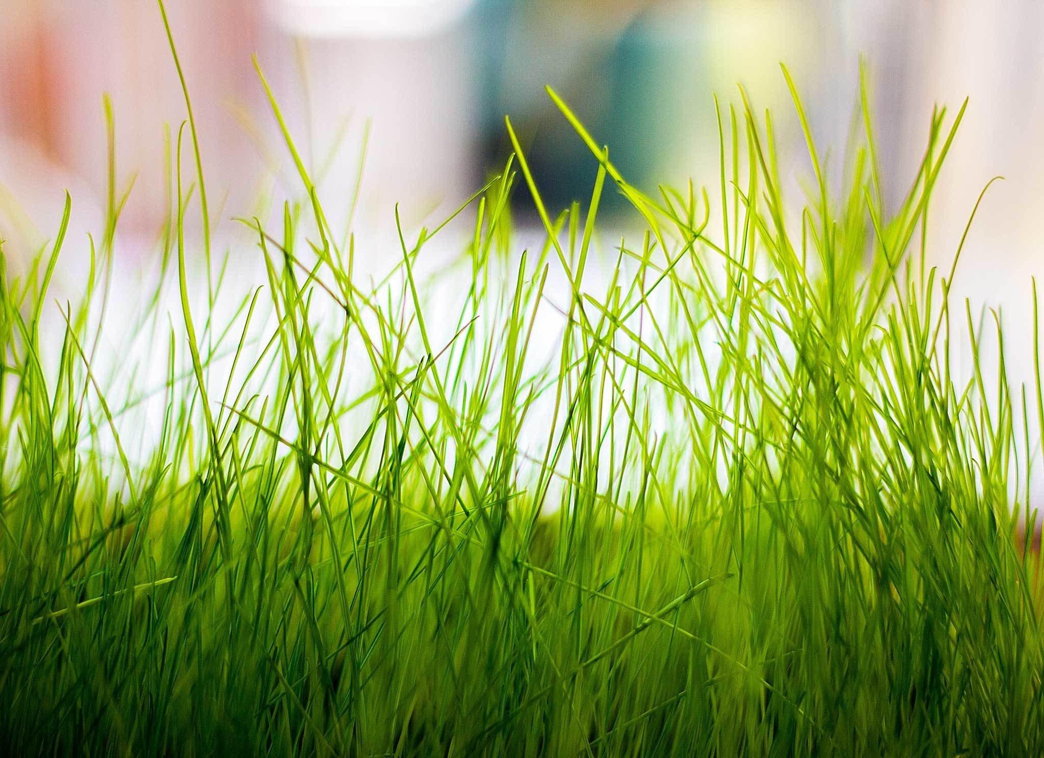 grass macro photography - photo #36