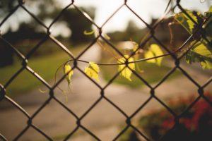 plants, Fence, Depth of field