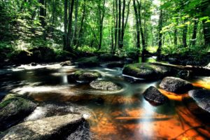 landscape, Forest, River, Rocks