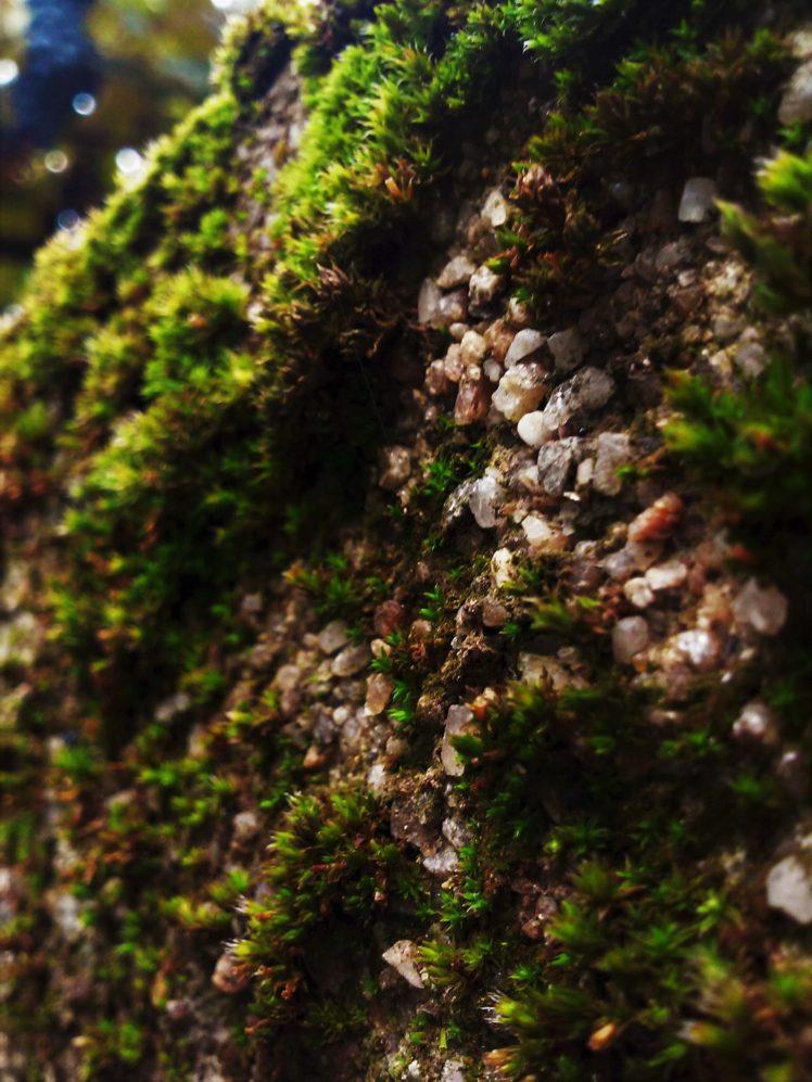 moss, Pebbles HD Wallpaper Desktop Background
