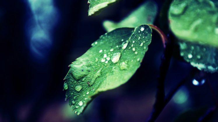 nature, Leaves, Water, Water drops HD Wallpaper Desktop Background