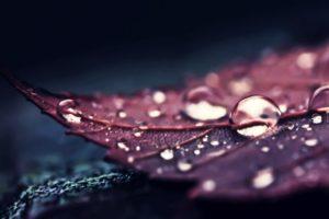 nature, Leaves, Water, Macro, Water drops