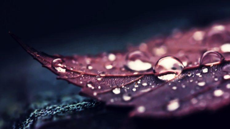 nature leaves water macro water drops hd wallpapers desktop