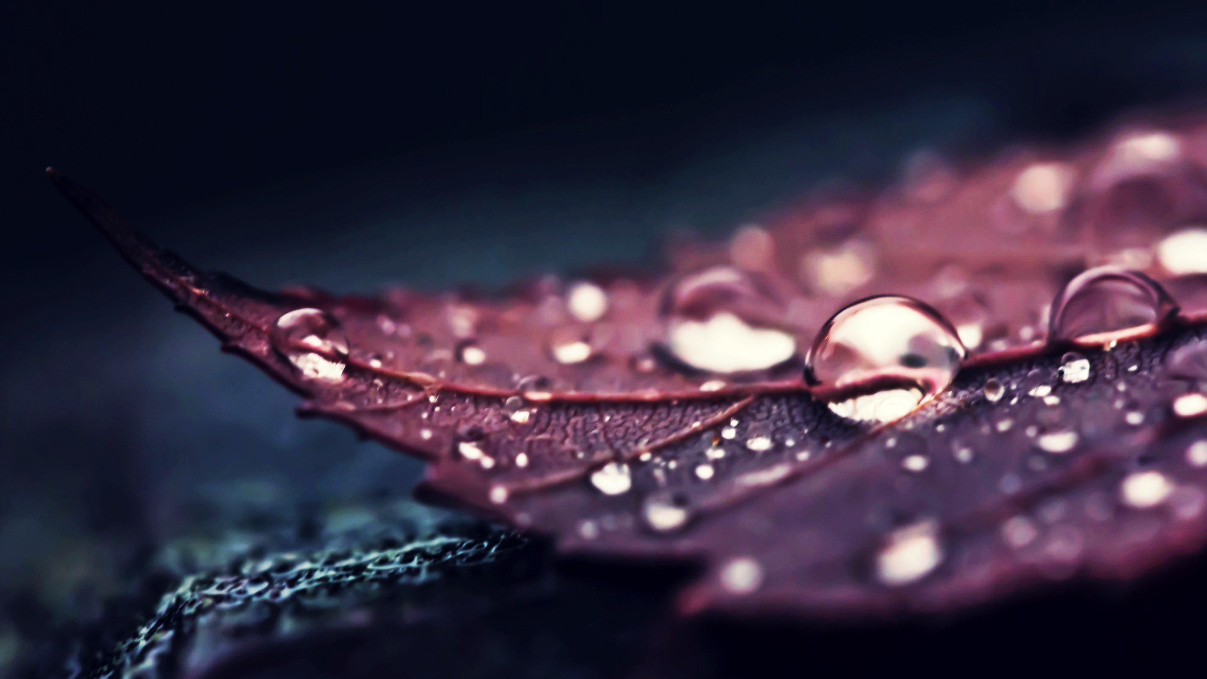 Macro Wallpapers For Mobile Phones: Nature, Leaves, Water, Macro, Water Drops HD Wallpapers