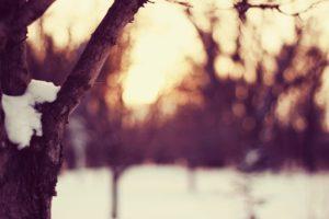 snow, Tree bark, Winter, Cold, Dusk