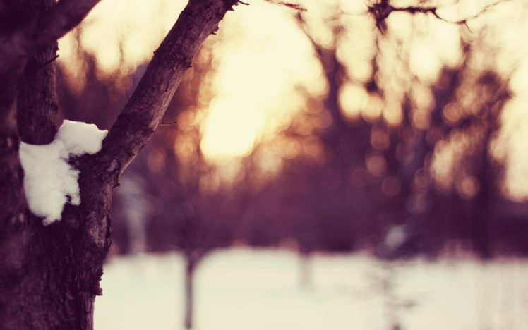 snow, Tree bark, Winter, Cold, Dusk HD Wallpaper Desktop Background