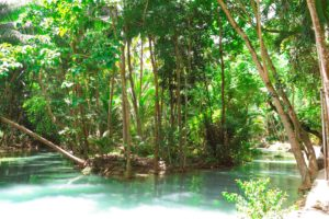 forest, Philippines, River, Jungle, Leaves, Trees