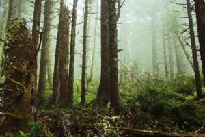 forest, Ferns, Mist, Tree stump, Nature