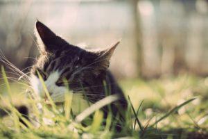 animals, Cat, Grass