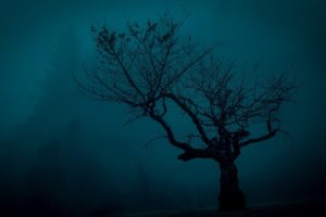 trees, Spooky, Landscape, Night, Nature