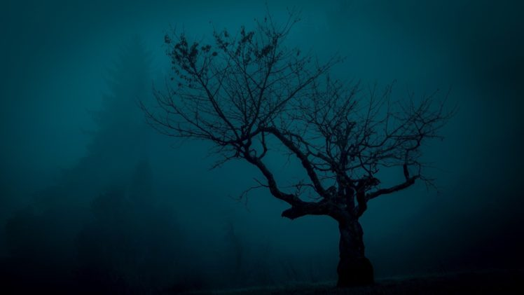 Trees Spooky Landscape Night Nature HD Wallpaper Desktop Background