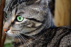 green eyes, Cat, Landscape, Contrast