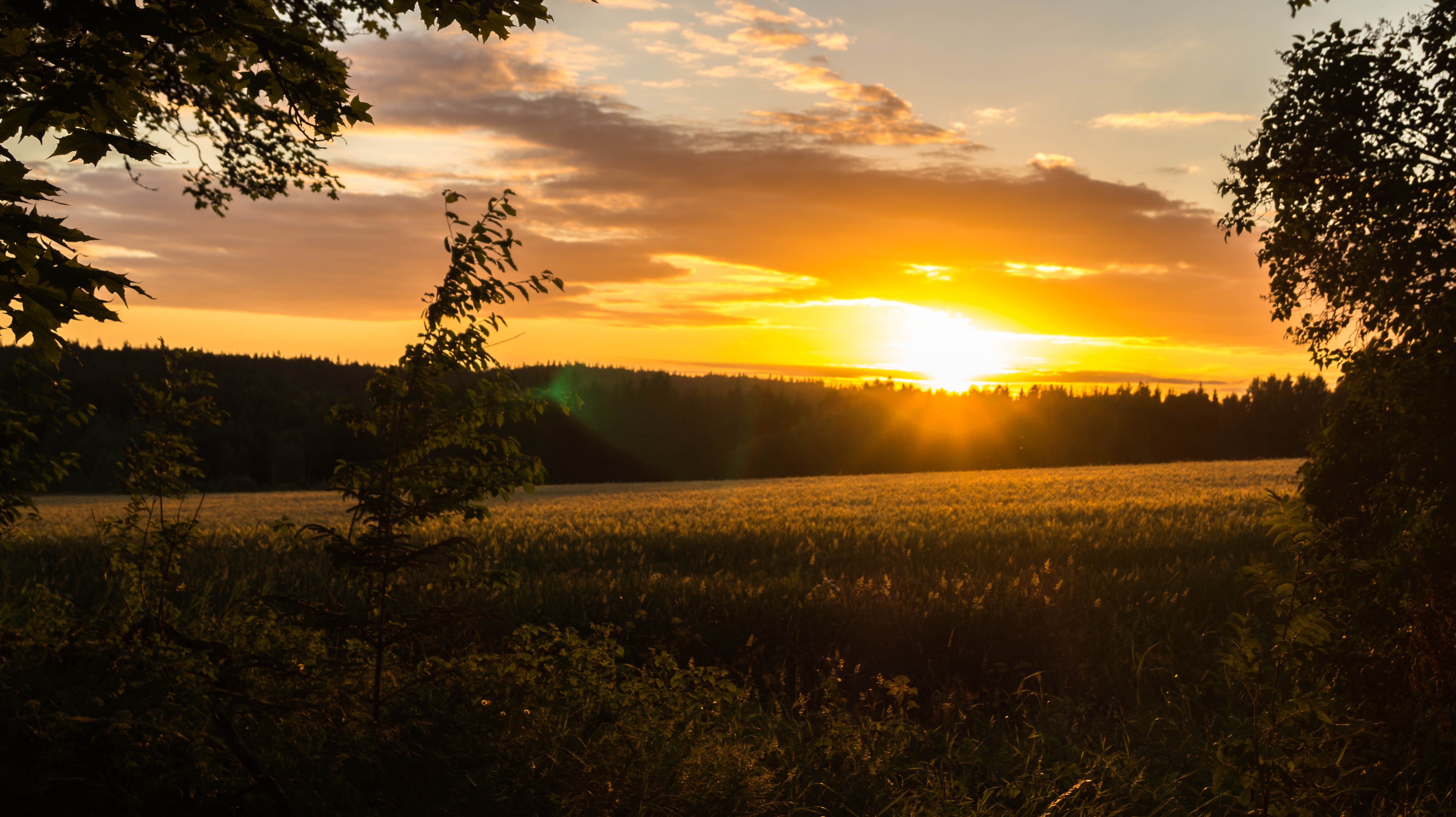 Hd Wallpapers For Mobile: Sunset, Landscape, Field, Sweden HD Wallpapers / Desktop