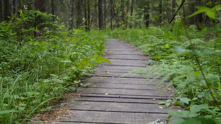 Landscape Path Sweden Hiking Forest Depth Of Field Hd Wallpapers Desktop And Mobile Images Photos